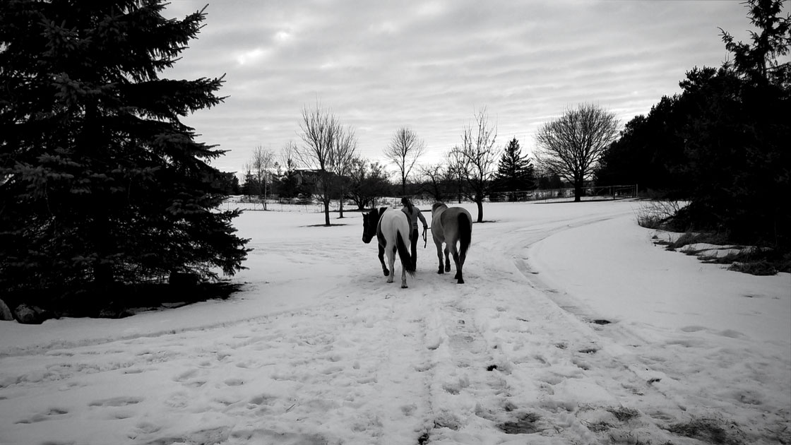 leading two horses