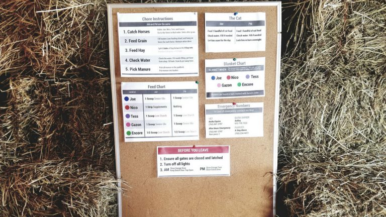 8 Tips for Creating Simple Horse Care Instructions