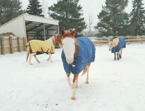 Be Present – Your Horse Deserves It!